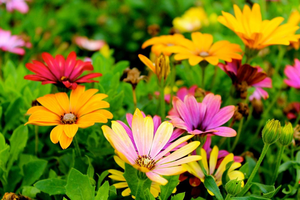 Voorjaarsbloeiers voor een kleurrijke tuin.